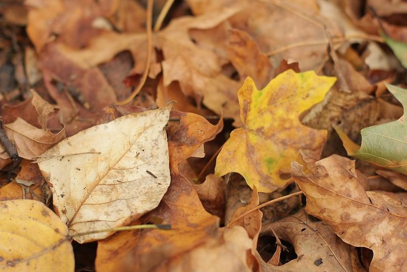 OREGON!!!!! carpet of leaves
