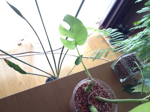 monstera_newlwaf2015(3)