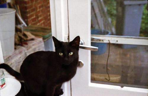 Loa wants to go outside