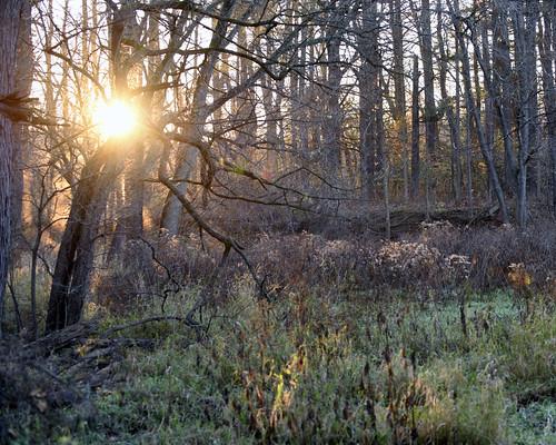 woods purple ryersonwoods