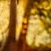 Autumn Essence 4 by Salwa Afef