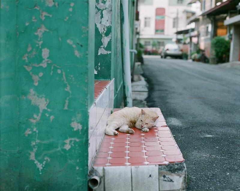 Pentax 67 貓