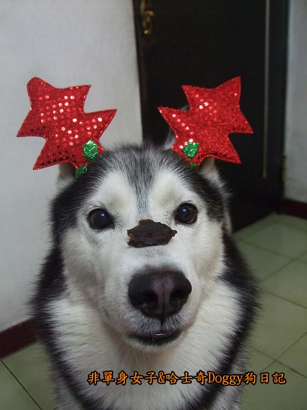 Doggy聖誕節紅色聖誕樹髮箍裝扮13