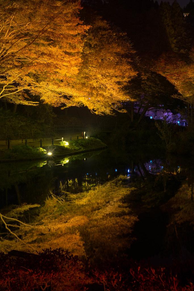 六甲高山植物園 ライトアップ