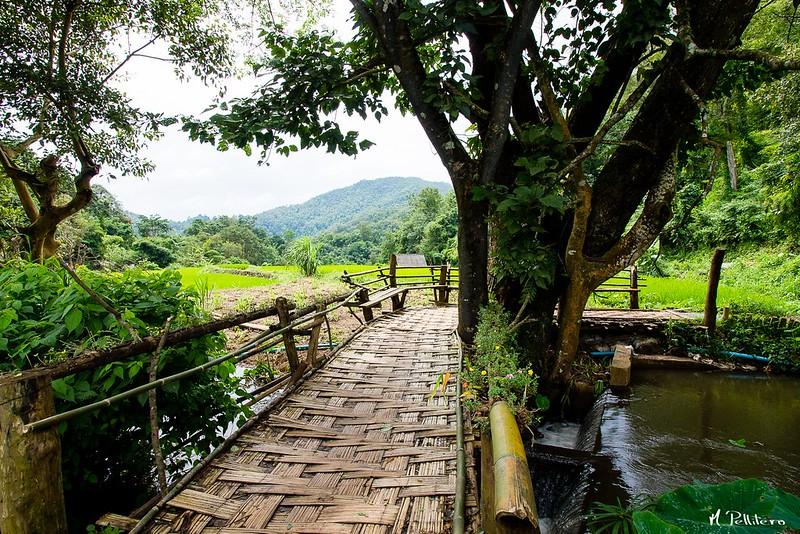 Puente de Bambu