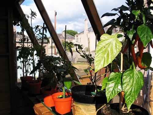 Garden update!