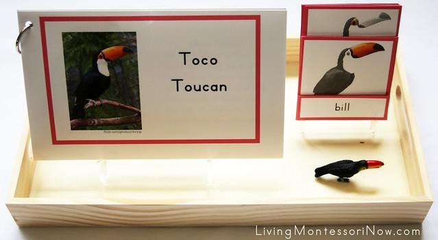 Toco Toucan Tray