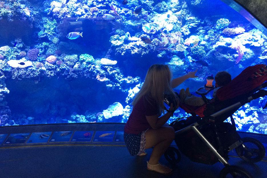 070915_aquarium06