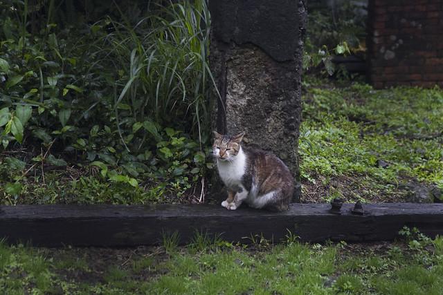 猴硐貓村 Houtong Cat Village