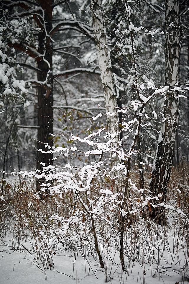 Тёплый снег 5