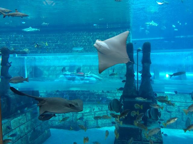 Aquadventure - Dubai