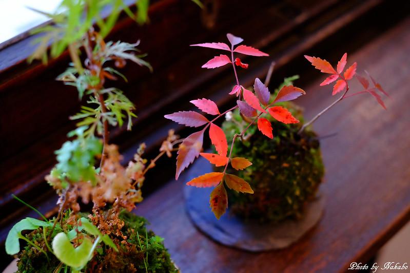 季節のしつらえ【懐かしいけど新しい】 by Nakabo