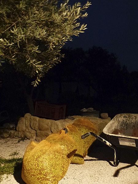 les olives la nuit