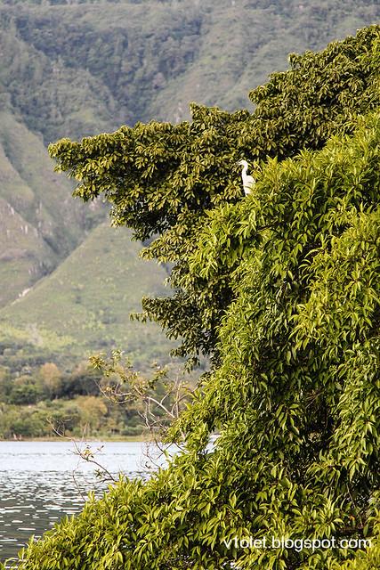 Carolina30 bird-1050rw