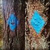 Faces on the blue blazes! #wildwoodtrail #wildwoodtrailpdx