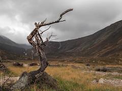 foreboding landscape