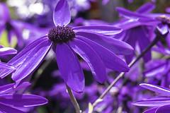 Purple Petal Power