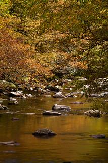 Creek view #2