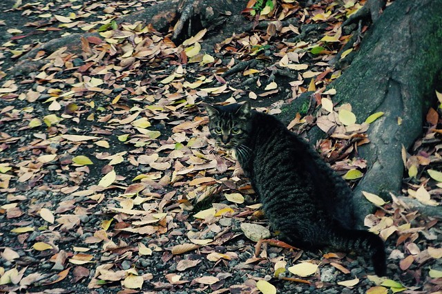 Today's Cat@2016-12-06