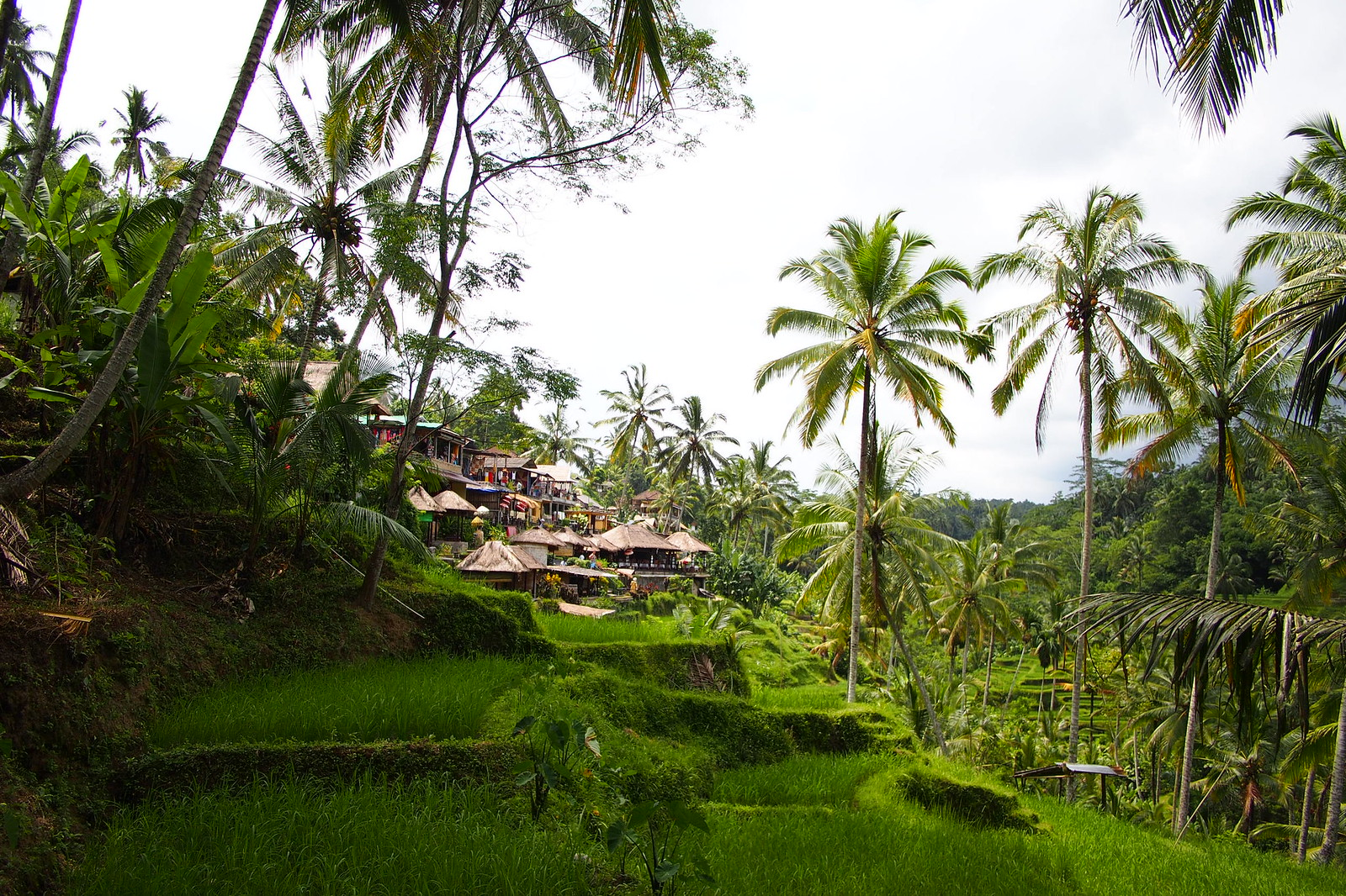View of the rice terrace from the valley in Ubud Bali