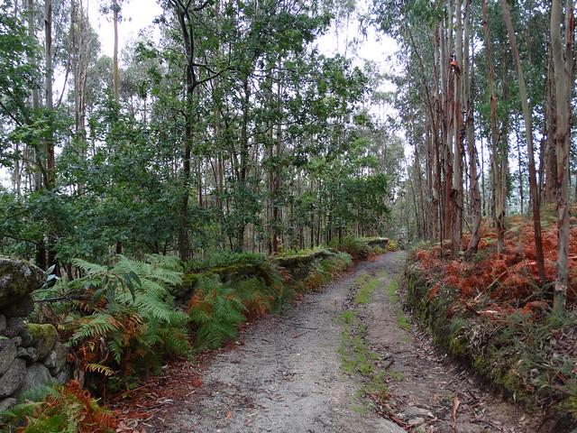 Camino en el Ruta de Zarzo a Chelo