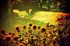 夏のオフィーリア -Ophelia in summer by Hodaka Yamamoto