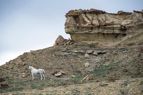 horse newmexico us unitedstates crownpoint
