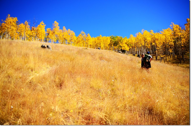 Fall colors at Kenosha Pass, Colorado (29)