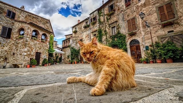 La gatta fotomodella - Montemerano.