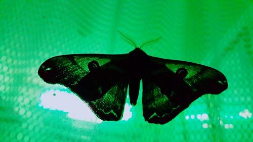 LINEcamera_share_2015-09-27-19-56-32.jpg