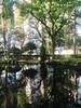 Arvores,agua reflexo