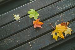 Leaves | Autumn 2015