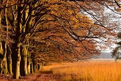 Nationale Park De Hoge Veluwe