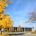 Ginkgo Tree  and the Richmond Municipal Building