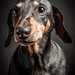 Portrait of Bubbles by Steven Green Photography
