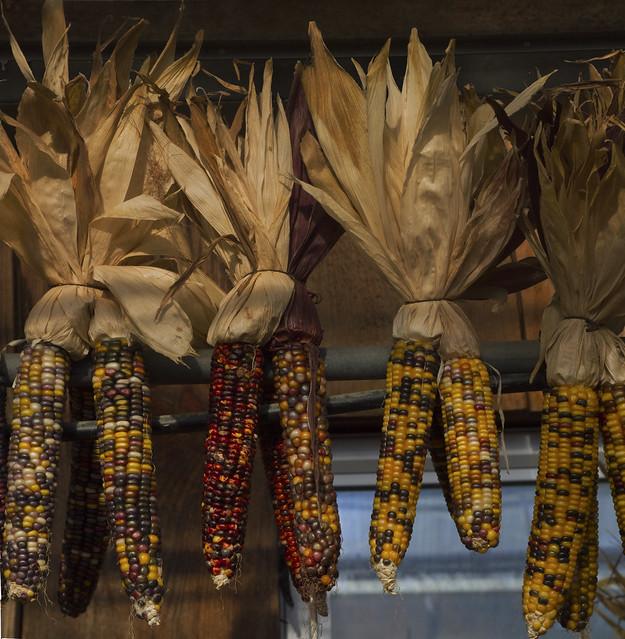 Pumpkins and blue corn at Tindercrop Farm; Newbury, Massachusetts (2015)