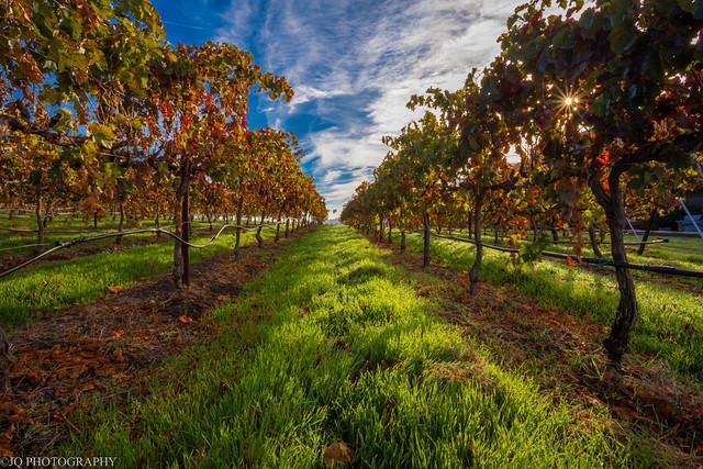 Fall at a Vineyard