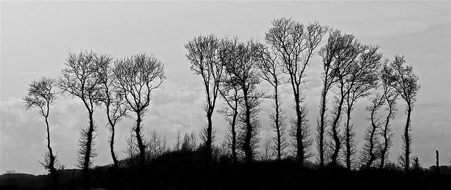 Breton treeline
