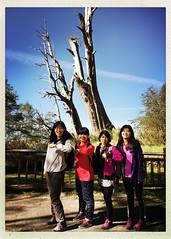 2015_11 塔塔加_夫妻樹 16