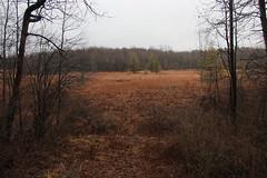 IMG_2997-Mendon Ponds Park