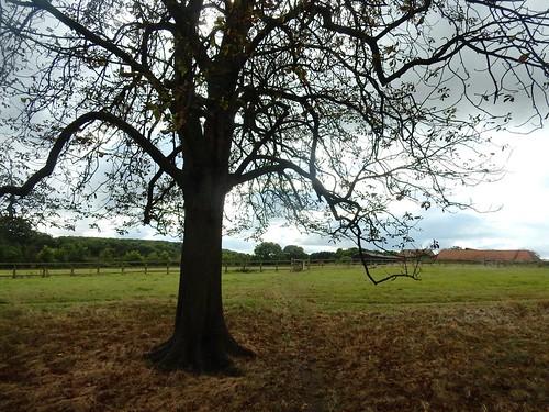 Tree near Highlands farm