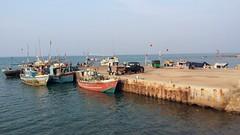 Point Pedro Harbour