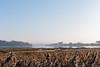 View across Upton Lake