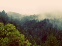 Fog In Santa Cruz Mountains
