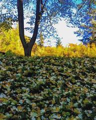 #bolzano #bozen #winter #leaf #colours #trees #subhanAllah #sky #naturelovers #ig_street #ig_worldclub #awesome_shots #igersitalia #samsung #picoftheday #statigram