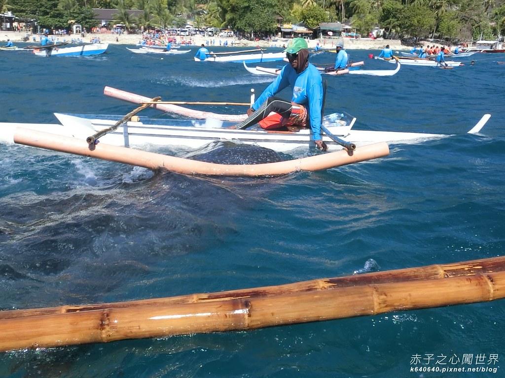 宿霧鯨鯊游泳-Oslob Whale Shark-008