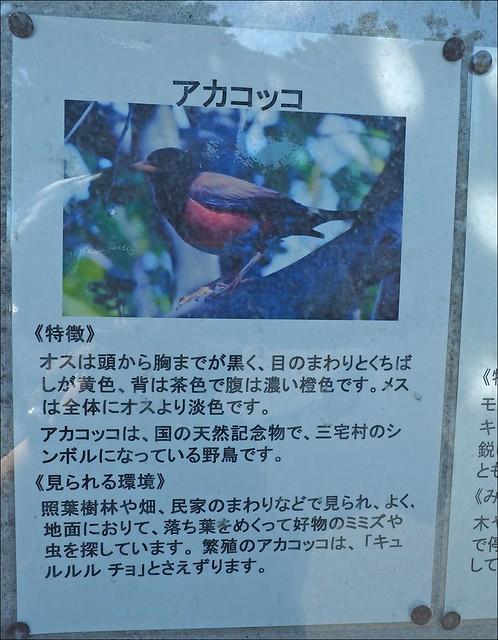 三宅島_042
