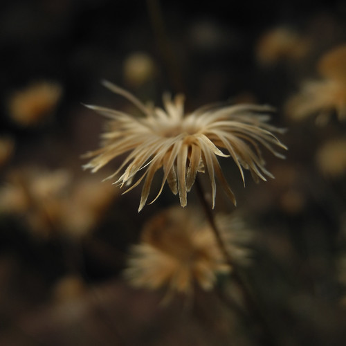 llambreig posted a photo:	I love how in the cold, my breath flowers before me.—Darcie Dennigangoo.gl/pG04BZ