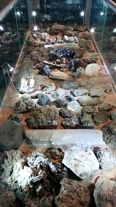 Museo de Paleontología, GDL Jalisco.