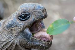 Visit to Francois Leguat Giant Tortoise Reserve